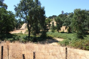 I love the foothills of the Sierras - the blond rolling hills studded with oak trees.