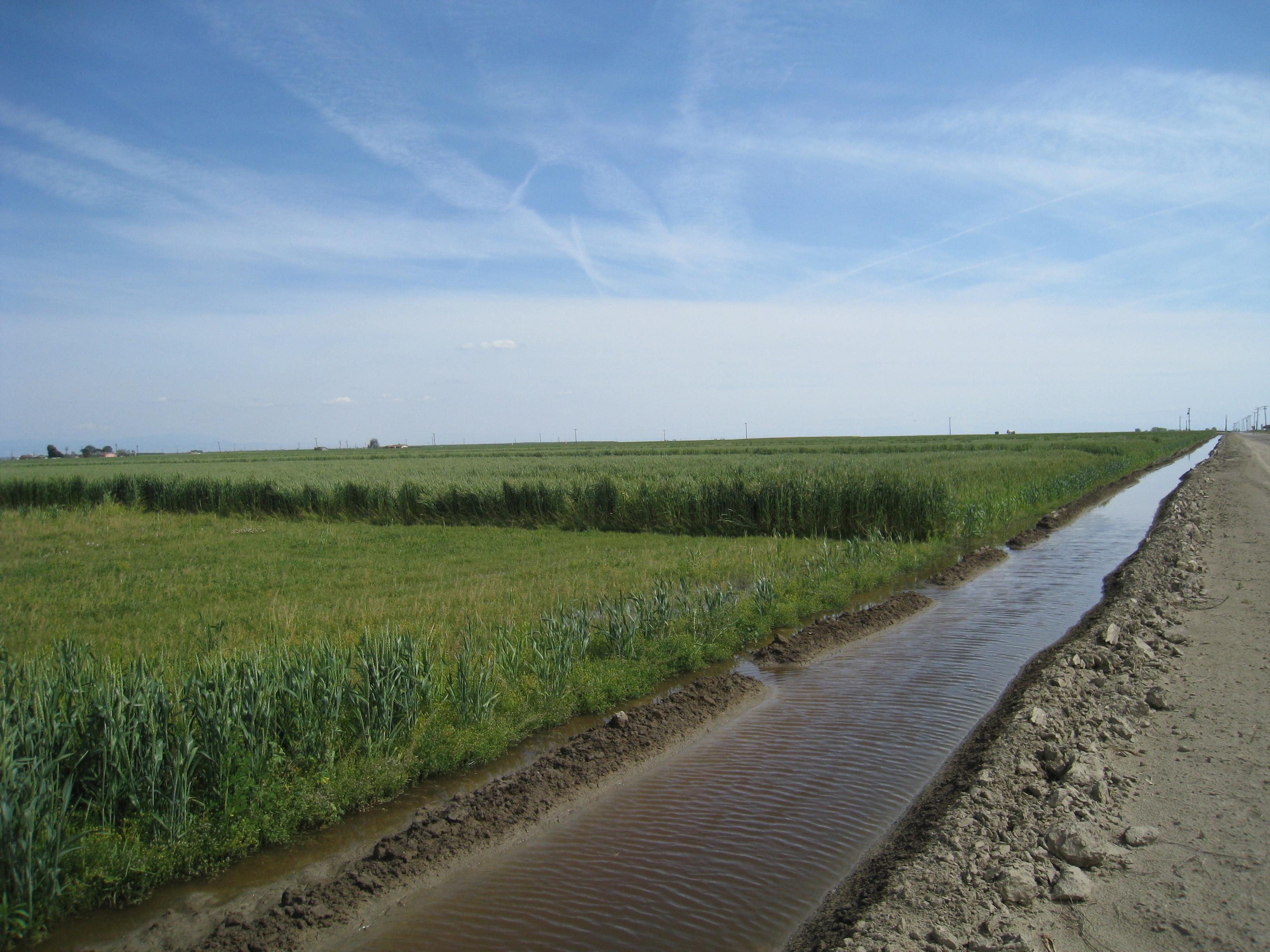 field under irrigation central valley 2 apr 2009 maven s photoblog