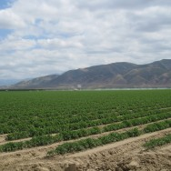 so-central-valley-fields-irrigation-teerink-2-apr-2010