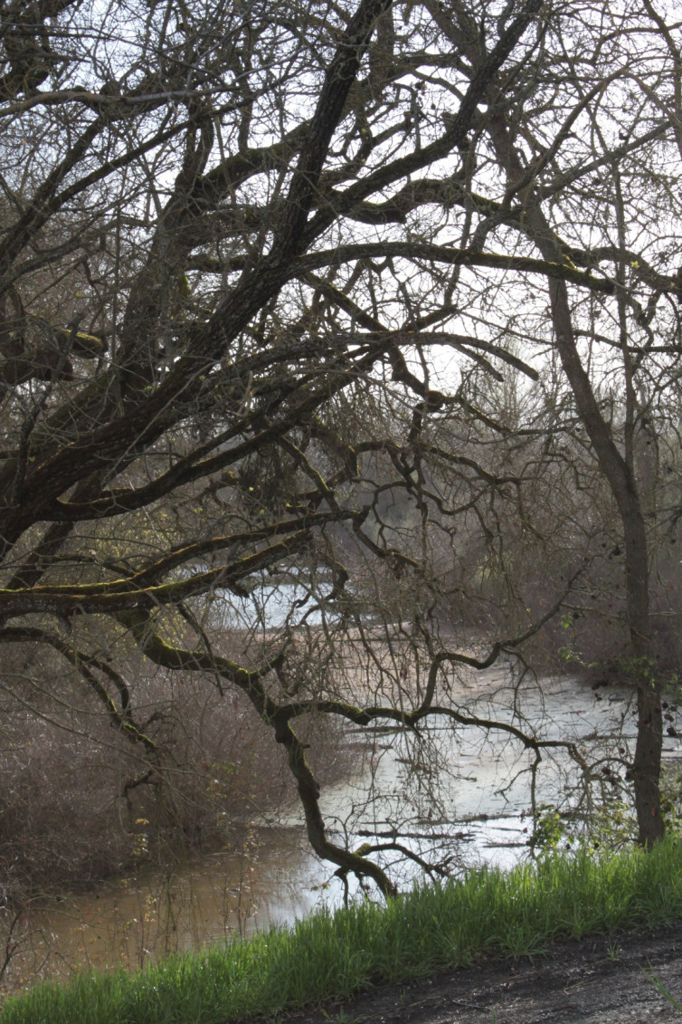 sacramento-river-at-the-fremont-weir-mar-2011-1