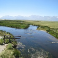 Upper Owens River #1 07-2008