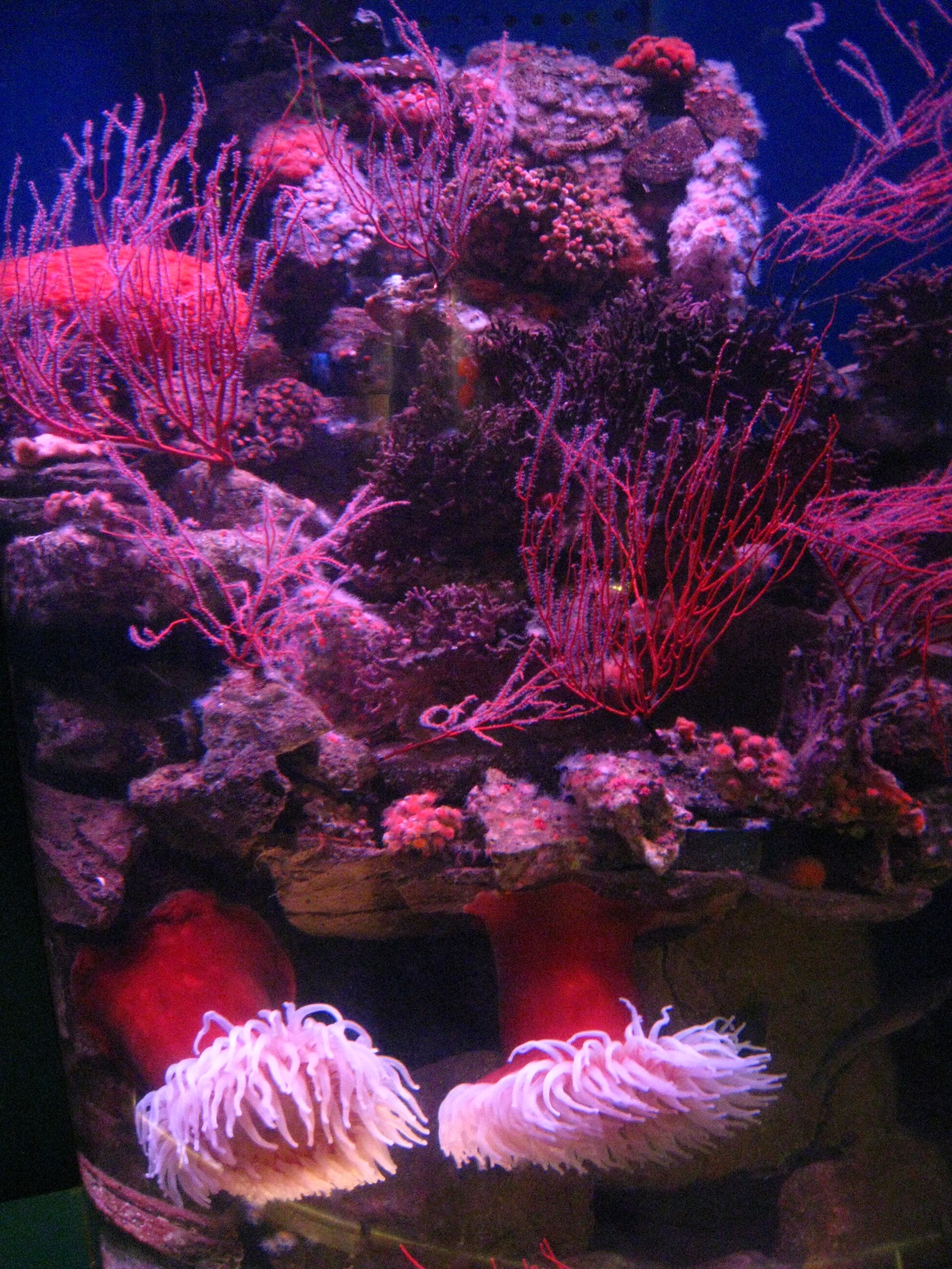 Long Beach Aquarium Oct 2010 #9