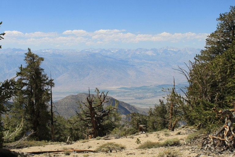 Bristlecone Pine Forest Aug 2012 #21