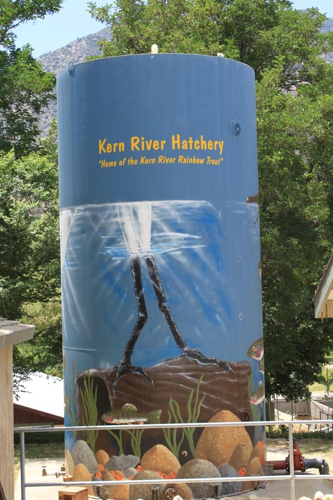 Kern River Hatchery June 2012 #1