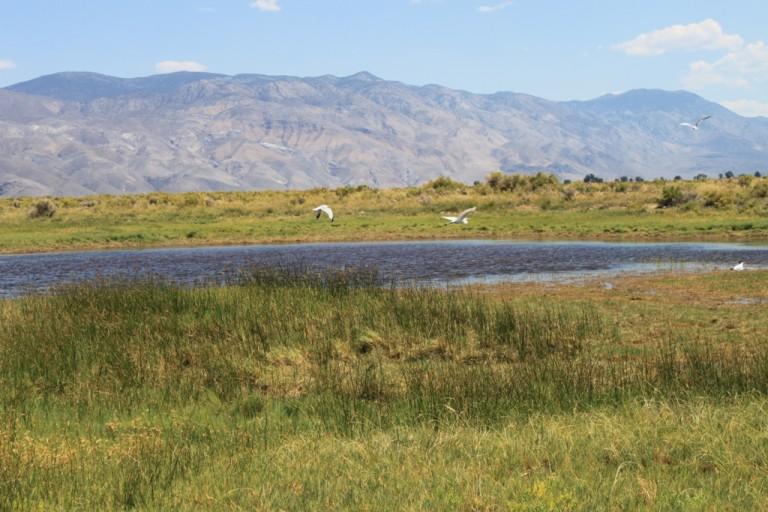 Klondike Lake wetlands Aug 2012 #3