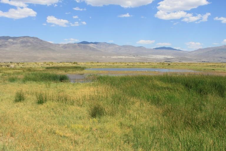 Klondike Lake wetlands Aug 2012 #7
