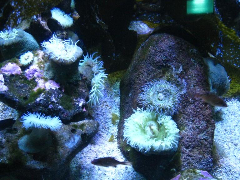 Long Beach Aquarium Jan 2013 #10