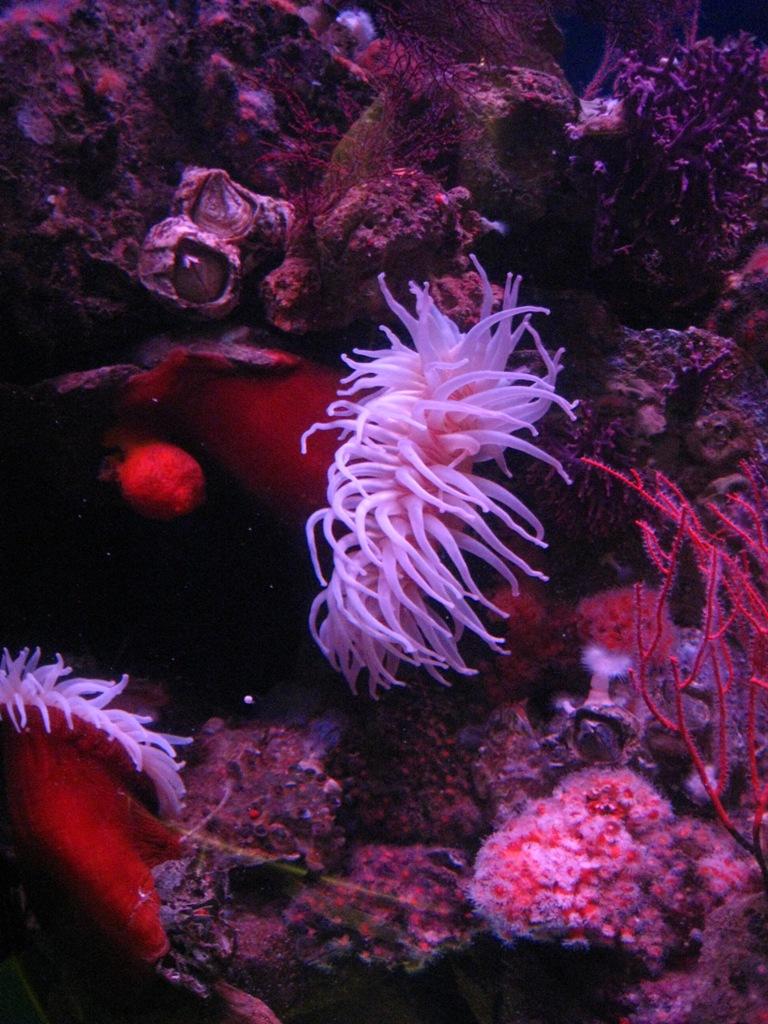 Long Beach Aquarium Jan 2013 #13