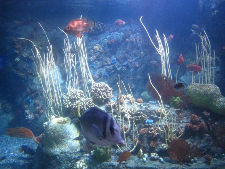 Long Beach Aquarium Jan 2013 #18