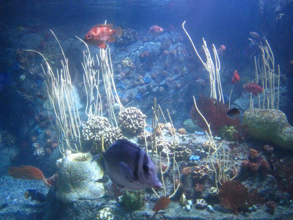 Long Beach Aquarium Jan 2017 18