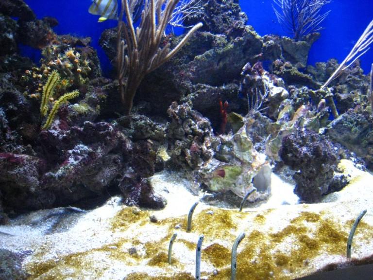 Long Beach Aquarium Jan 2013 #19