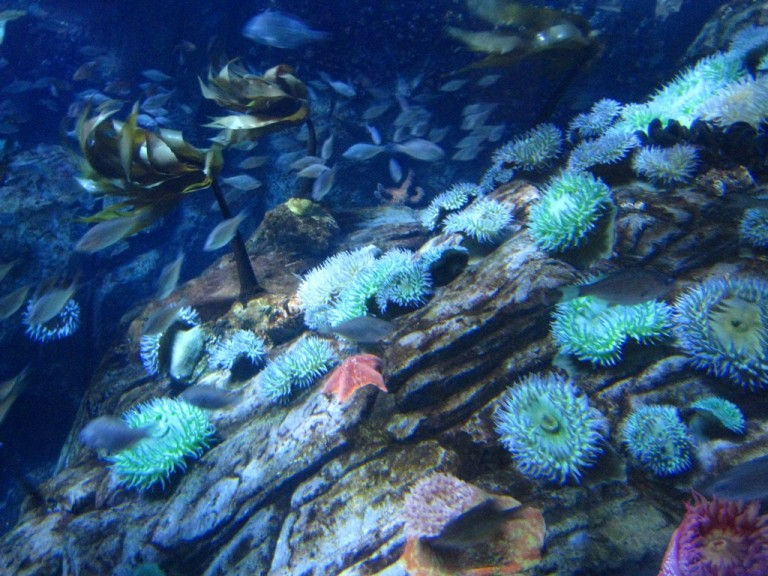 Long Beach Aquarium Jan 2013 #22