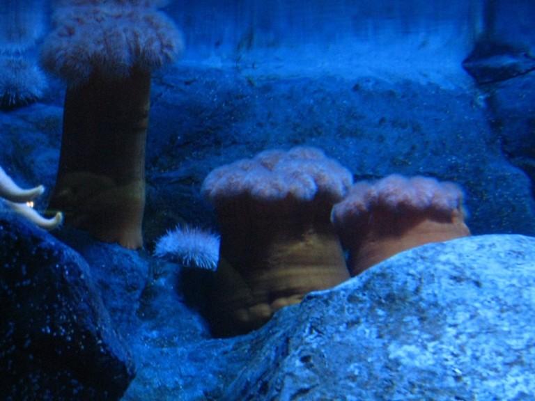 Long Beach Aquarium Jan 2013 #33
