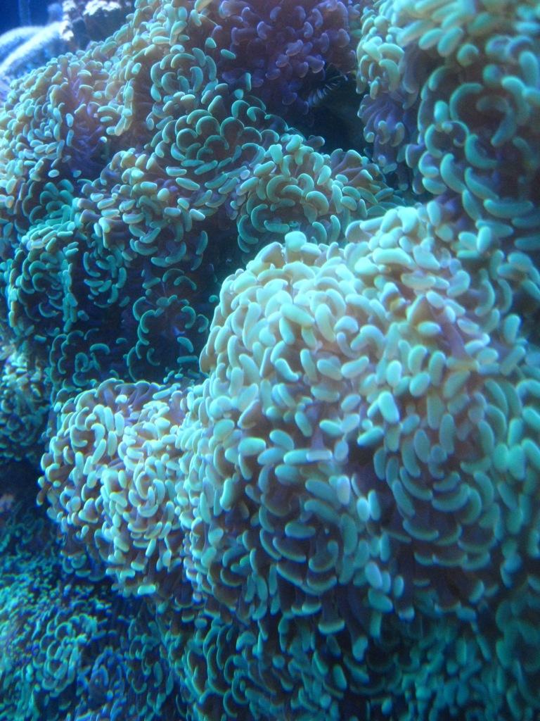 Long Beach Aquarium Jan 2013 #44