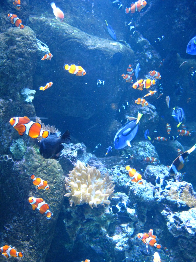 Long Beach Aquarium Jan 2013 #49