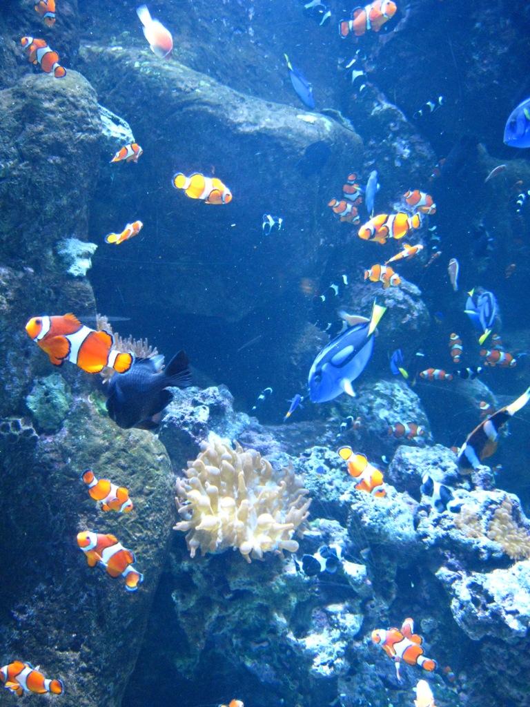 Long Beach Aquarium Jan 2013 #49