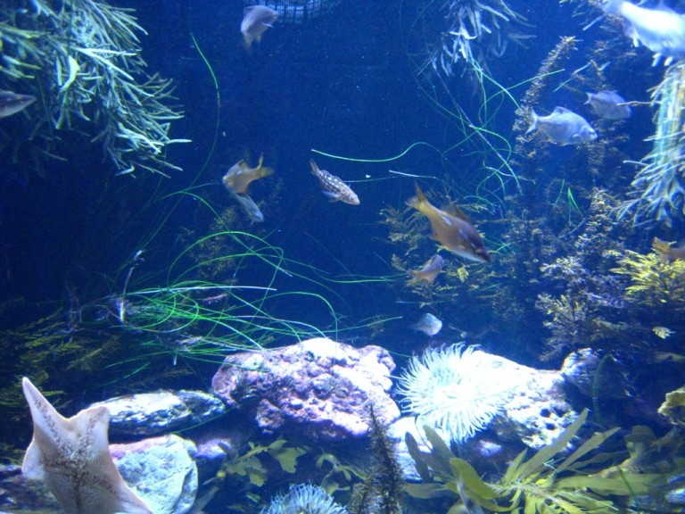 Long Beach Aquarium Jan 2013 #5