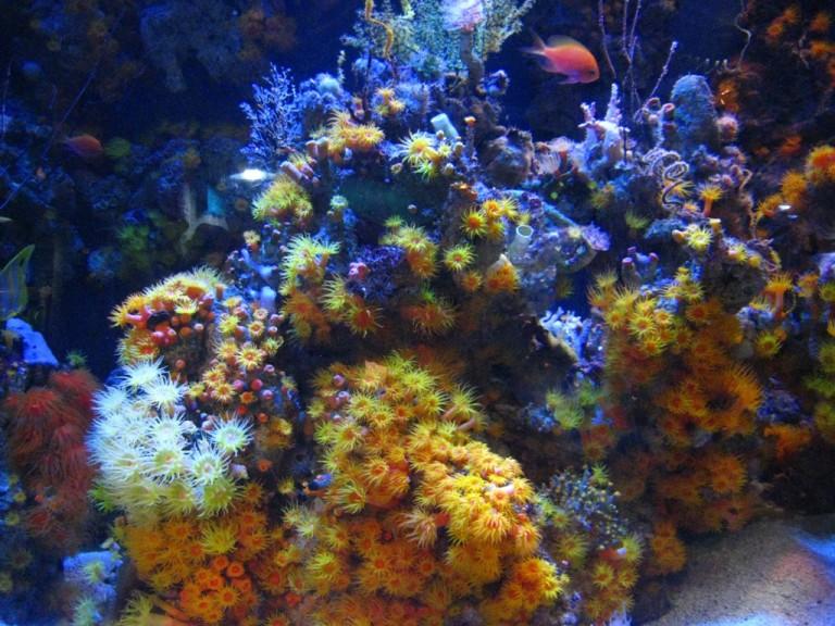 Long Beach Aquarium Jan 2013 #54