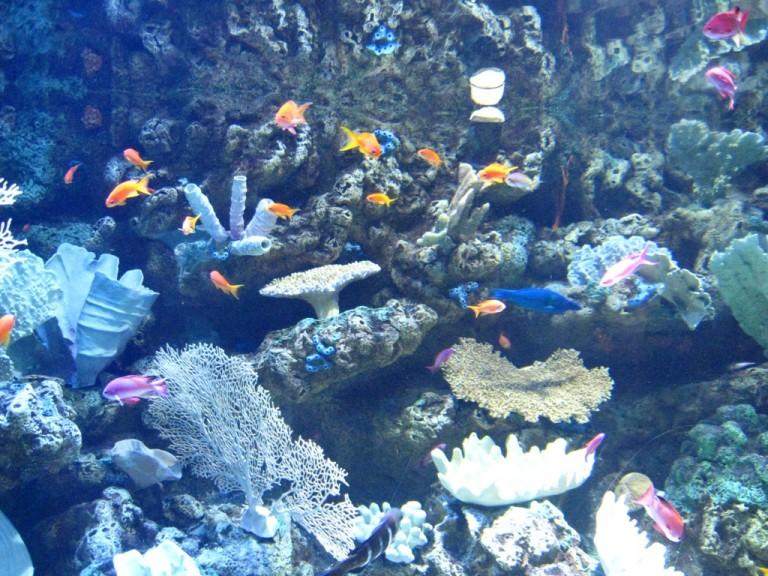 Long Beach Aquarium Jan 2013 #57