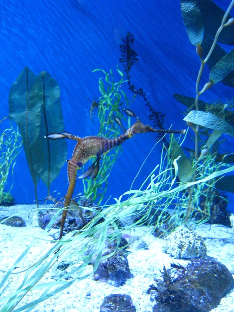 Long Beach Aquarium Jan 2013 #59