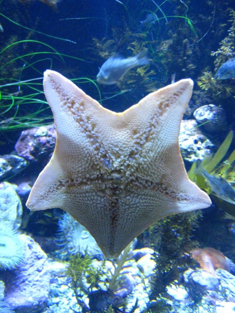 Long Beach Aquarium Jan 2013 #6