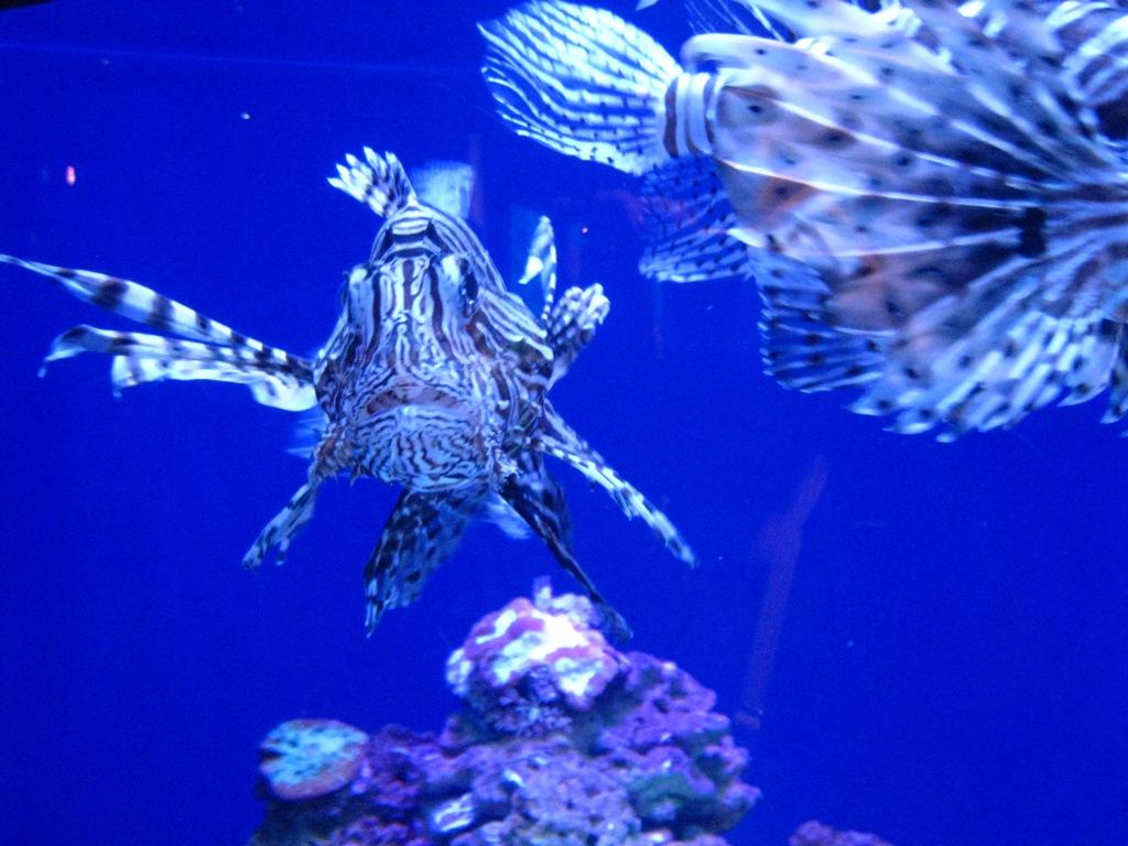 Long Beach Aquarium Jan 2013 #63