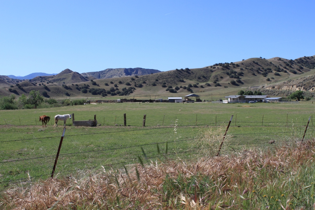 Cattle ranch west of Coalinga Apr 2012 #3