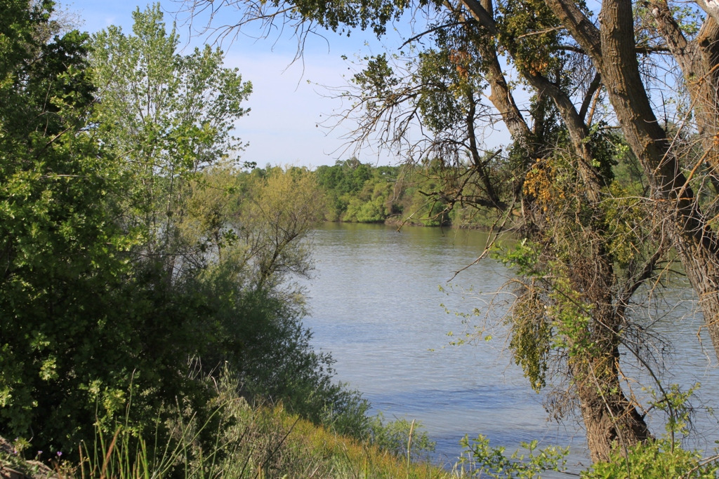 Sacramento River Garden Highway Apr 2013 #22