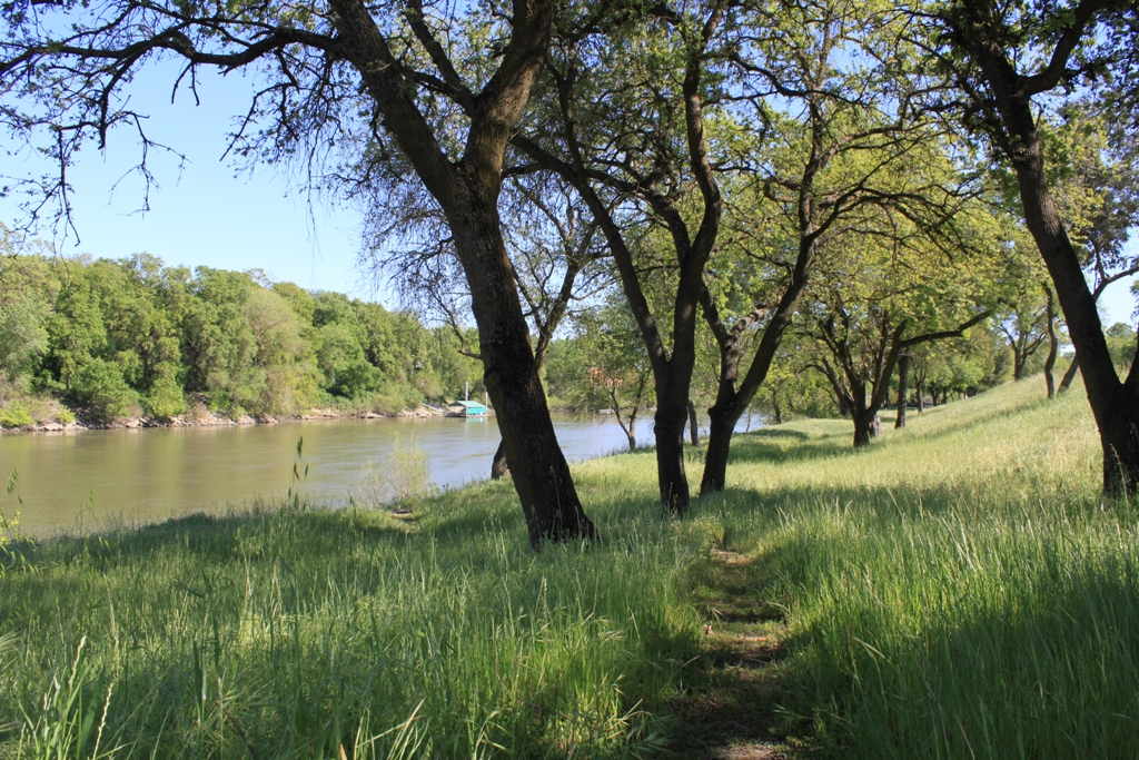 Sacramento River Garden Highway Apr 2013 #6
