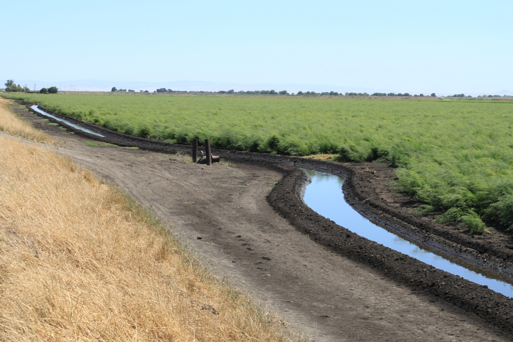 Agriculture in the Delta June 2013 #4