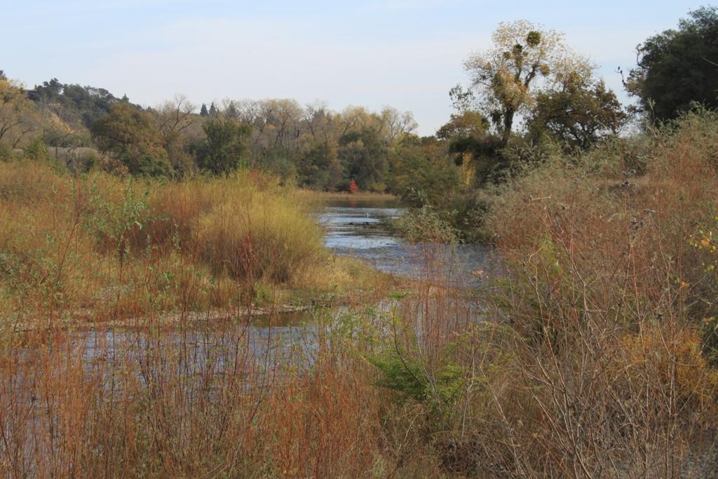 American River Nov 2013 #1
