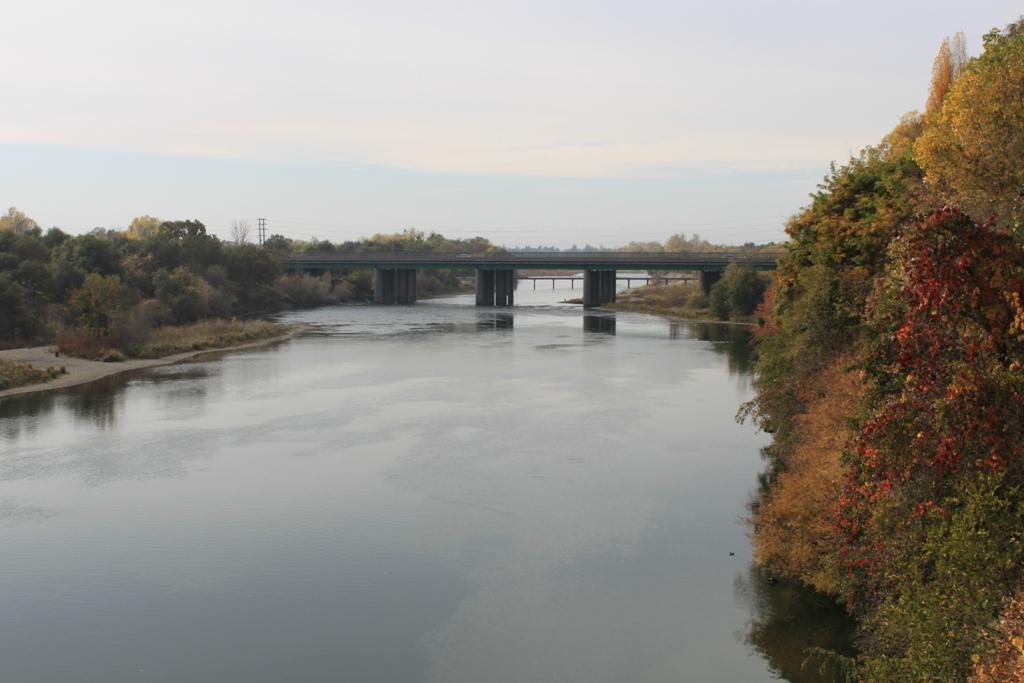 American River Nov 2013 #19