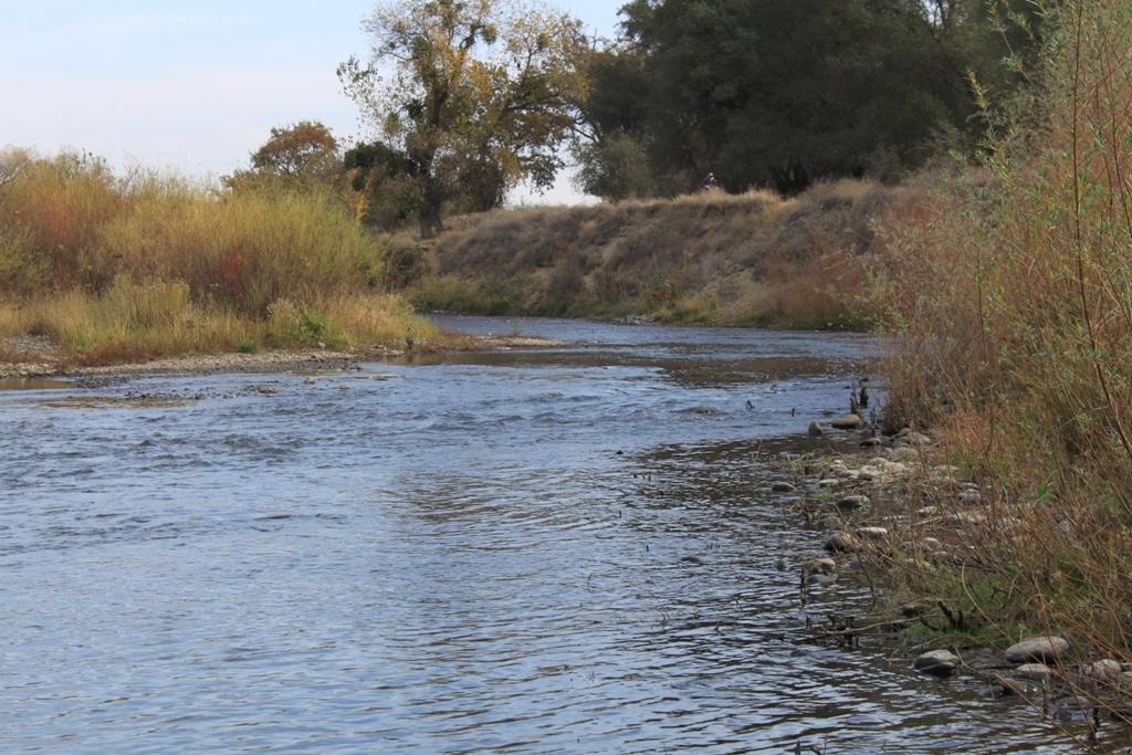 American River Nov 2013 #2