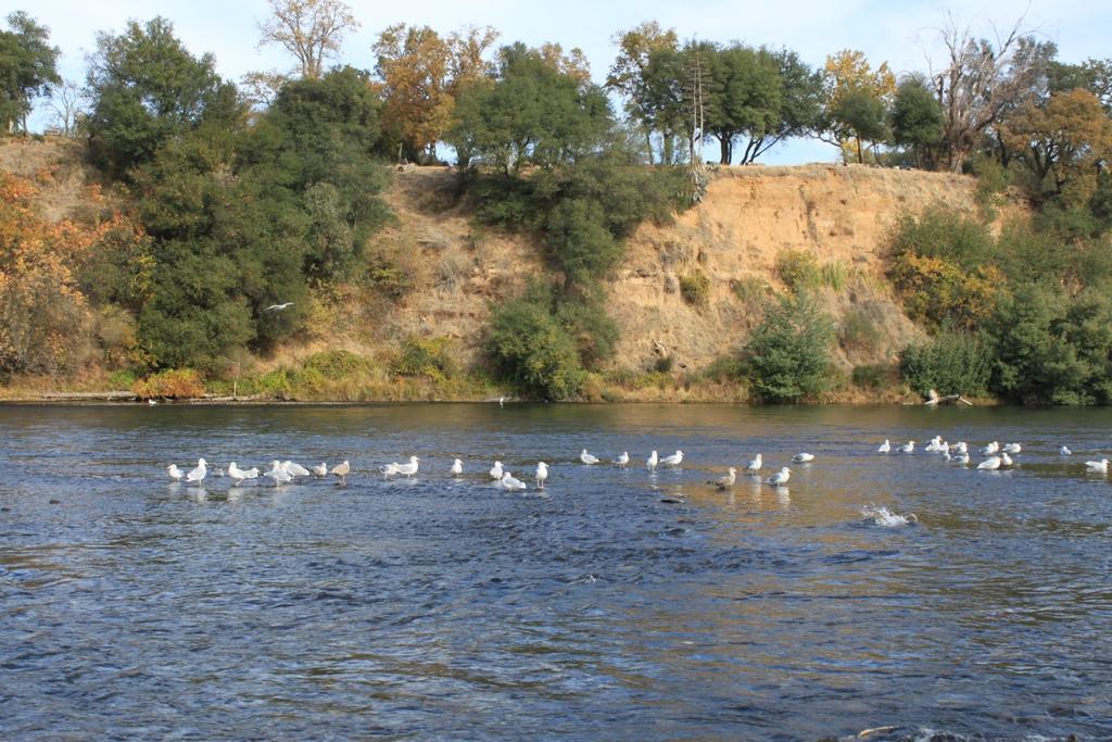 American River Nov 2013 #7