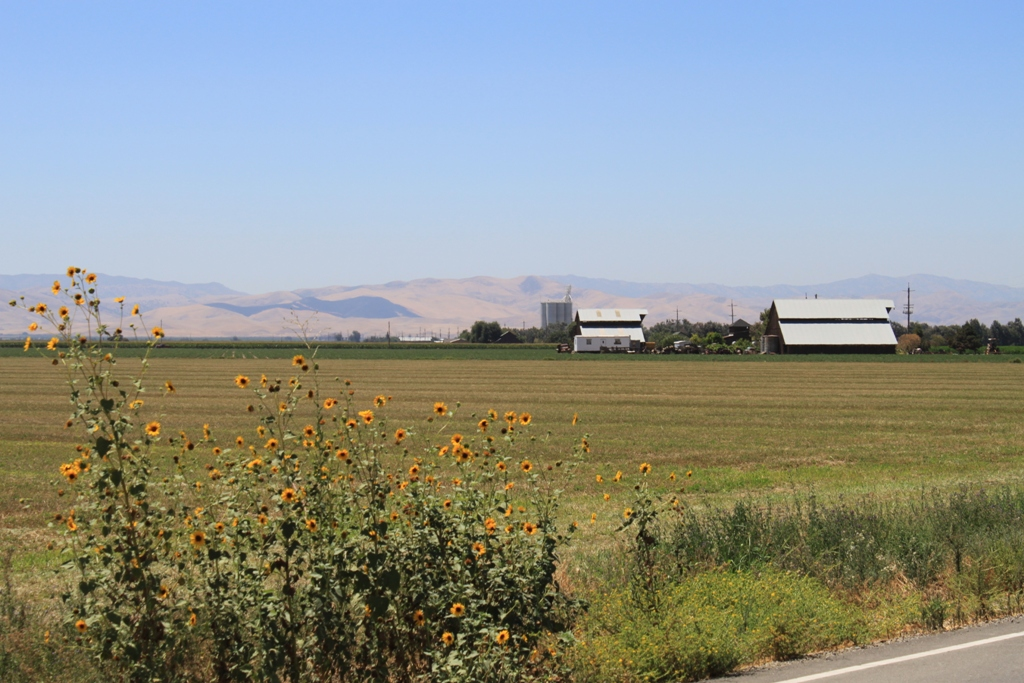 Central Valley fields July 2013 #3