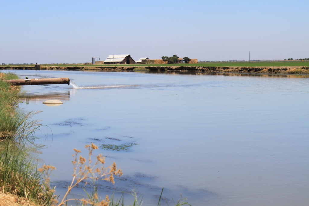 Central Valley irrigation canal July 2013 #3
