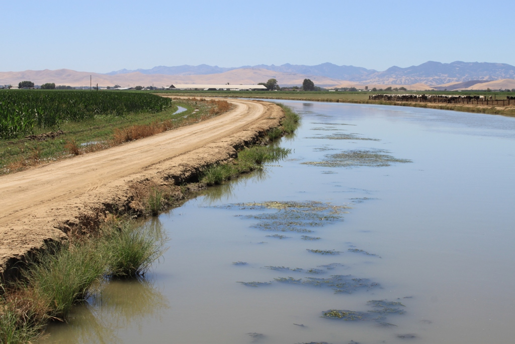 Central Valley irrigation canal July 2013 #5