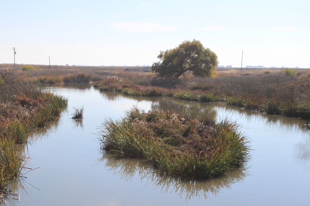Salt Slough by San Luis NWR Nov 2013 #1