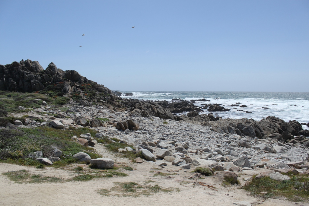 Monterey 17 Mile Drive  May 2014 #15