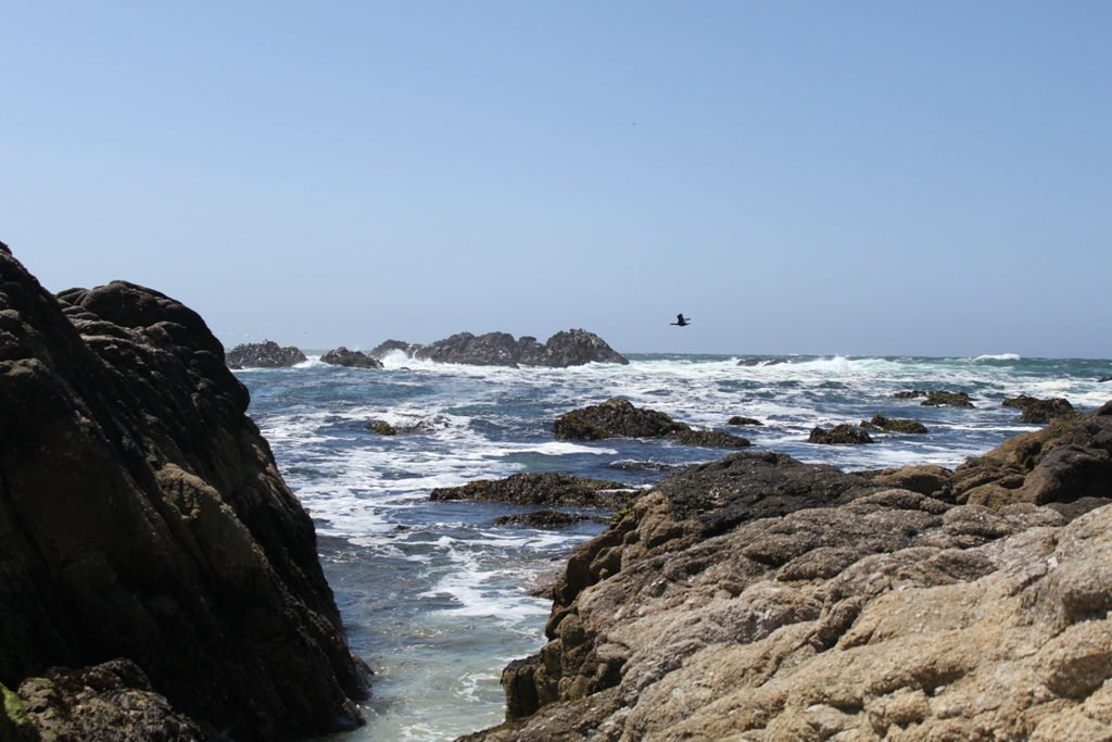 Monterey 17 Mile Drive  May 2014 #17
