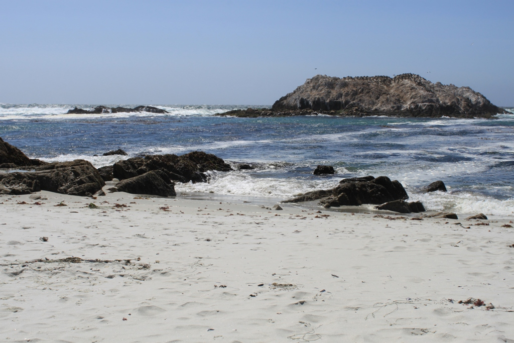 Monterey 17 Mile Drive  May 2014 #21