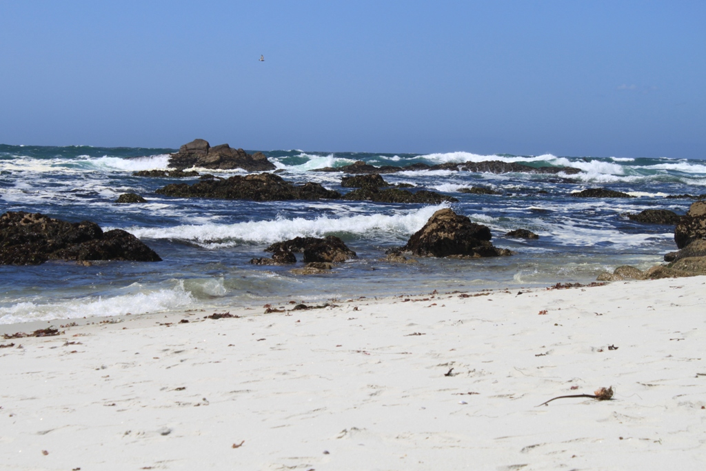 Monterey 17 Mile Drive  May 2014 #25
