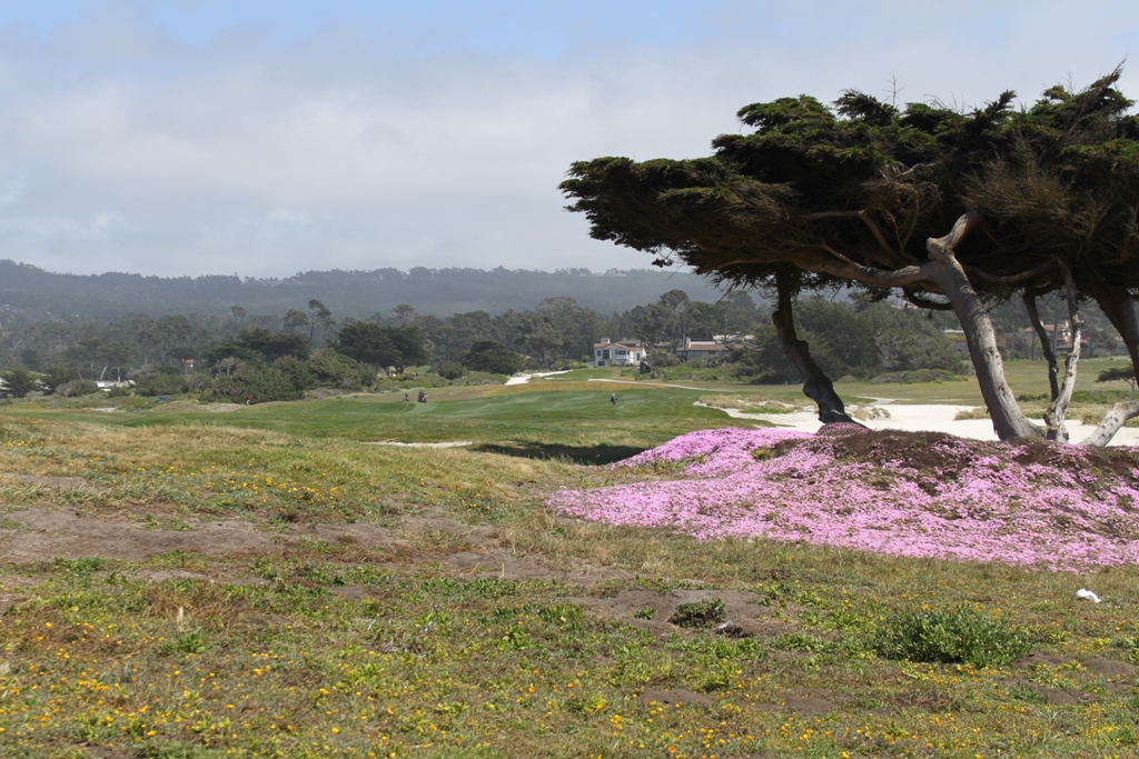 Monterey 17 Mile Drive  May 2014 #9