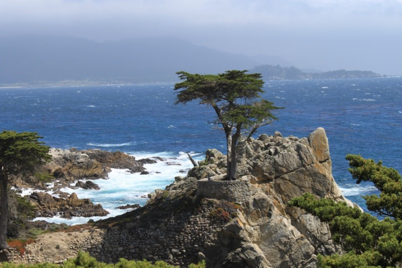 Monterey 17 Mile Drive  May 2014 The Lone Tree #30