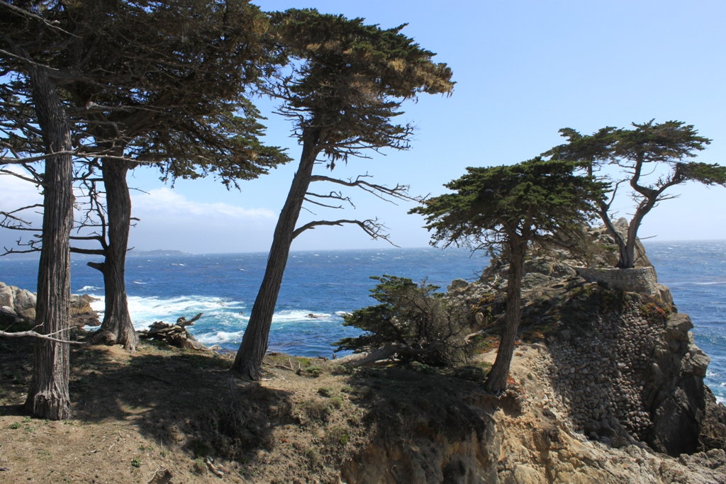 Monterey 17 Mile Drive  May 2014 The Lone Tree #35