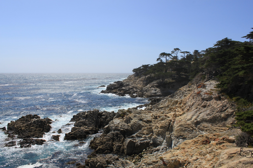 Monterey 17 Mile Drive  May 2014 The Lone Tree #37