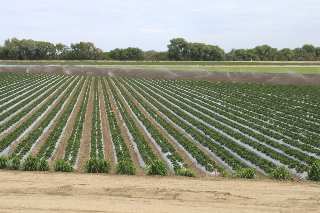Salinas Valley agriculture May 2014 #11