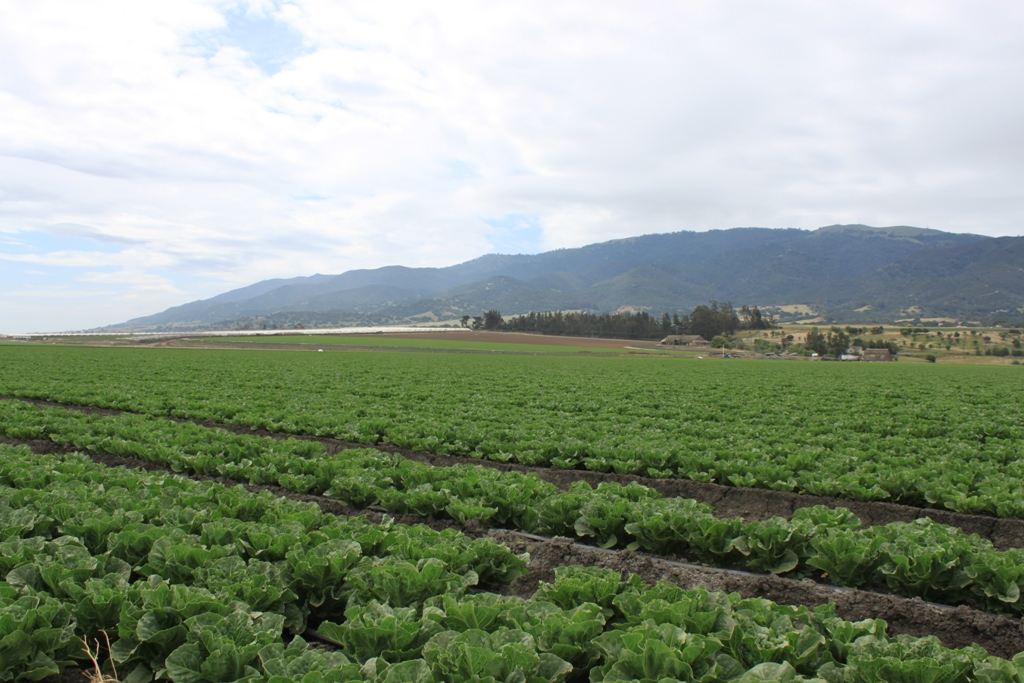 Salinas Valley agriculture May 2014 #14