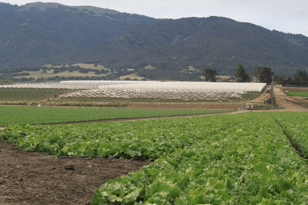 Salinas Valley agriculture May 2014 #18