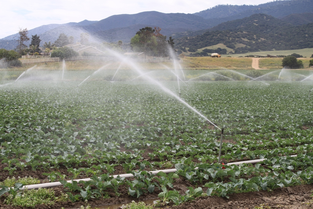 Salinas Valley agriculture May 2014 #34